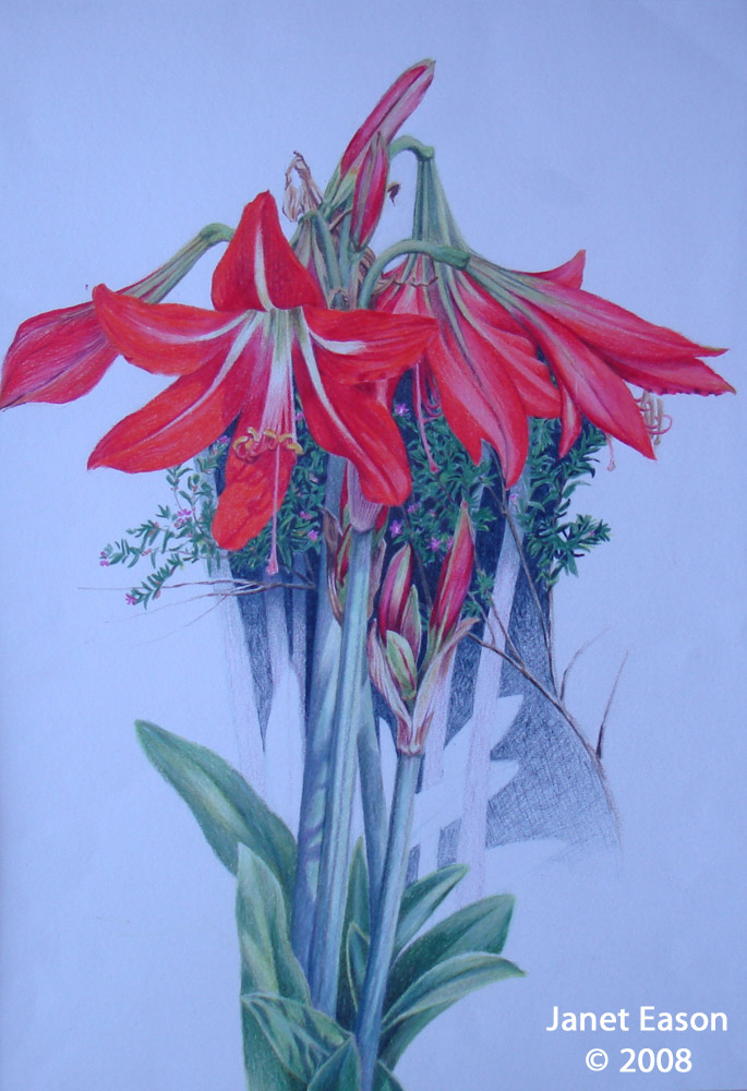 Colored pencil drawing - Flowers
